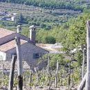 Pogled z vinograda