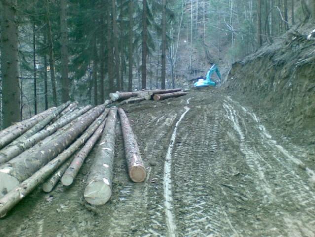 Gozdne vlake - foto