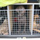 Zoya, Betty Blue in Zoro testirajo pasje rezidence.