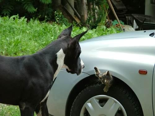 Ciper in njegova mačka Šiva, ki se je skrila pod kolo Lukovega avta