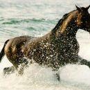 naj konji
