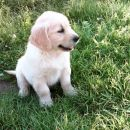 Timi - star 7 tednov