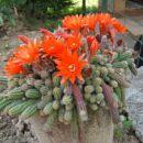 moji kaktusi