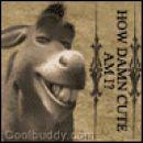 donkey :D