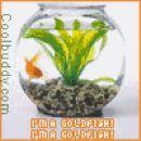 goldfish :P