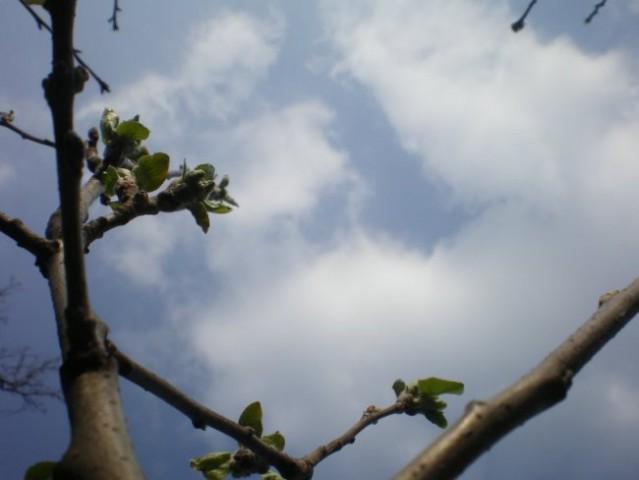 Nedelja, 18.3.2007 - foto