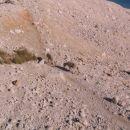 vmes smo mel obiske - čistokrvne paške ovčke