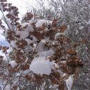 Listje v snegu