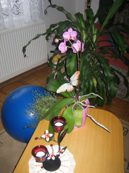 ROŽICE 2008 - foto