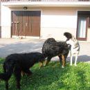 Neron se boji za svojo Luco, zato je pregnal Lenija! :)