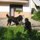 Bernc Neron ( Lucin kolega :) ), Luca in sosedov haski Leni.