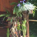 Vijolica in kaktusi, pripravljeni na cvetenje! :)
