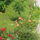 Vrtnice. :)