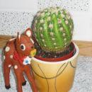 Bimbo pazi na moj kaktusek.