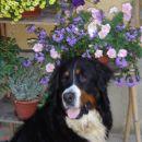 Lepotec med rožcami! ;)