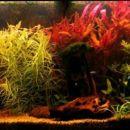 240l akvarij
