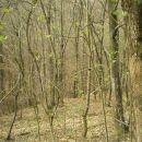 Šuma gdje sam uzaludno tražila gljive