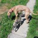 Čina in Canselott (27 apr 2005)