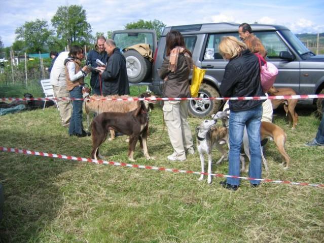 Strog veterinarski pregled