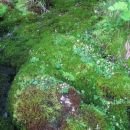 Zelena oaza.