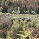 Planina Trebiščina - kako do nje?!