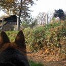 Opazovanje konja...
