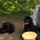 Buca in Ambra(vedno moram biti blizu vode...)