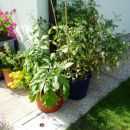 vrt v loncih 2011