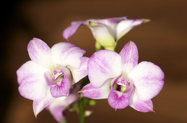 2010 - orhideje - foto