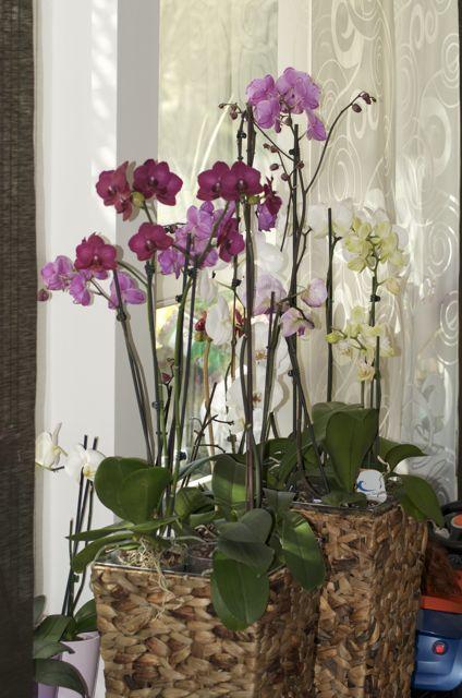 2010 - orhideje - foto povečava
