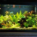 Moj 130l akvarij