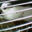 bunny moj zajček