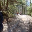 Lepa gozdna cesta.