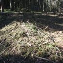 Gozdarsko razdejanje.