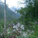 Lepa položna gozdna pot.