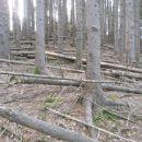Gozdno razdejanje.l