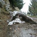 kukuc pod snegom