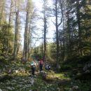 Pot se nadaljuje skozi gozd