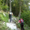 Začetek poti pelje skozi gozd
