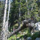 Lažji del plezalne poti