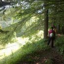 Pot skozi gozd proti Zgornjemu Špehu