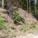 Gozdno razdejanje, kot ostanki orkana.