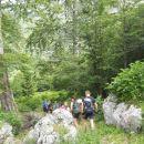 Pot od Koče na planini Razor skozi gozd