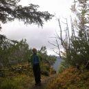 Pot skozi gozd na Ciprnik
