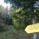 Pot skozi gozd