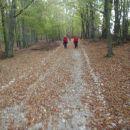 Zanimiva pot skozi gozd.