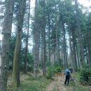 Pot skozi gozd proti Podmeji