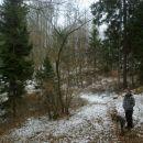 Pot nazaj skozi gozd