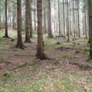 Čudoviti gozdovi.