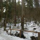 Pot zavije skozi gozd